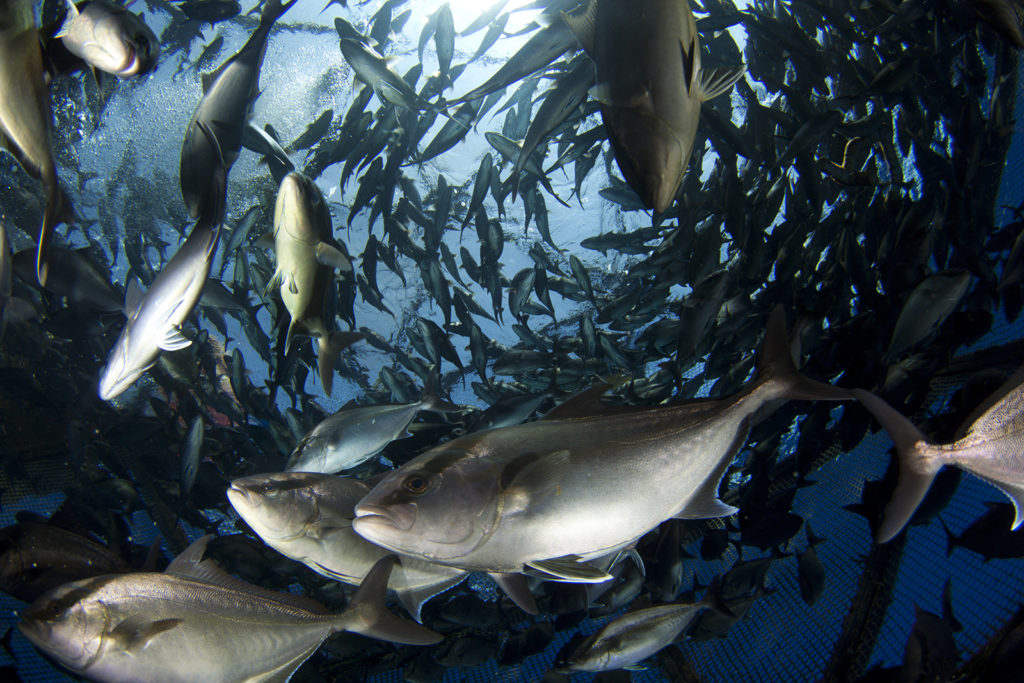 Article image for Offshore aquaculture inches closer to reality in the Gulf of Mexico