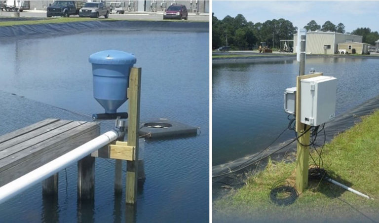 Article image for Automated feeding systems in pond production of Pacific white shrimp