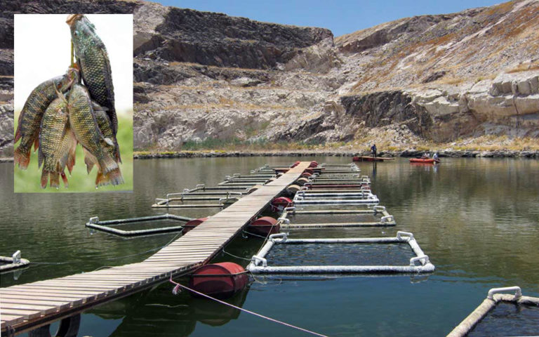 Article image for Namibia project raises tilapia in former mine