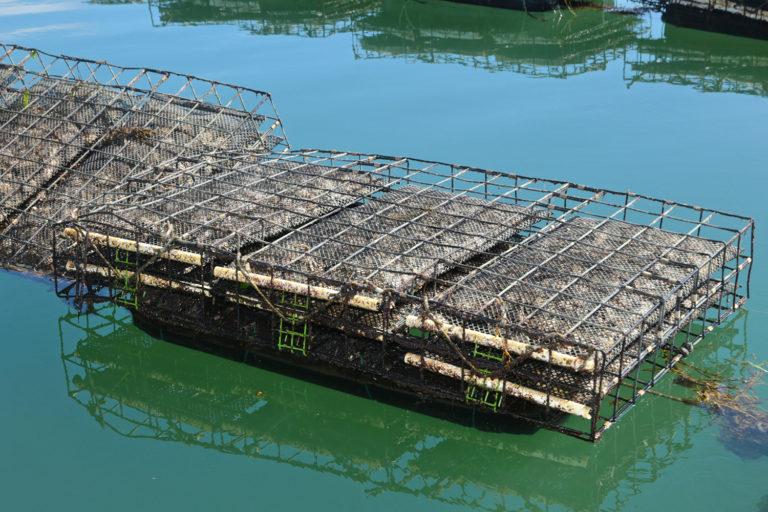 Article image for Climate change impacts unite U.S. shellfish farmers