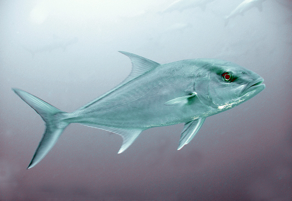 Article image for Ecuador sets legal framework for offshore fish farm development