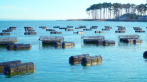 Salty Farmer Stories – Coming Soon to Primetime Thanks to Good Catch + white stone oysters