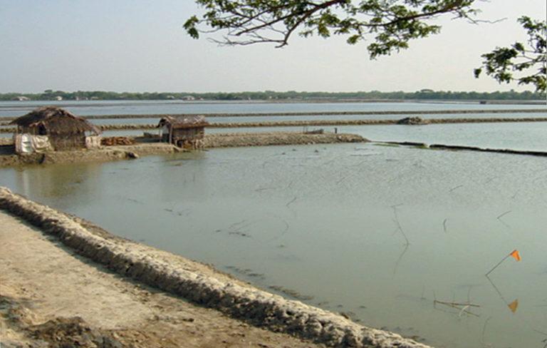 Article image for Shrimp farm quality management in Bangladesh
