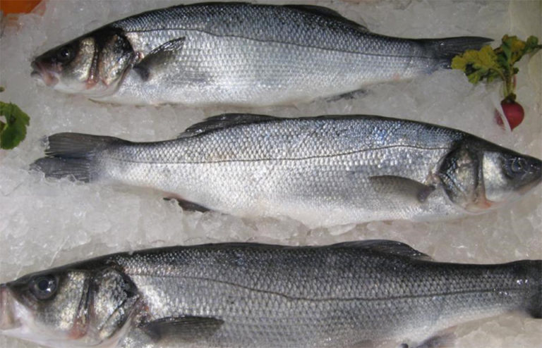 Article image for Connecticut 'urban fish farm' leans on RAS to produce branzino