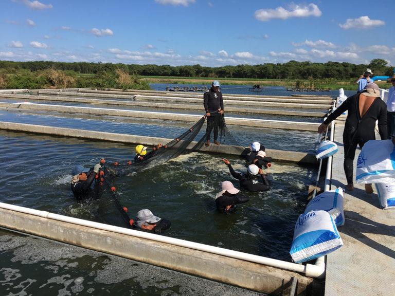 Article image for Demostración comercial de raceways en estanque
