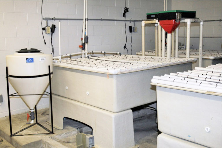 Article image for Shallow nursery system uses bioreactor concept for juvenile shrimp production