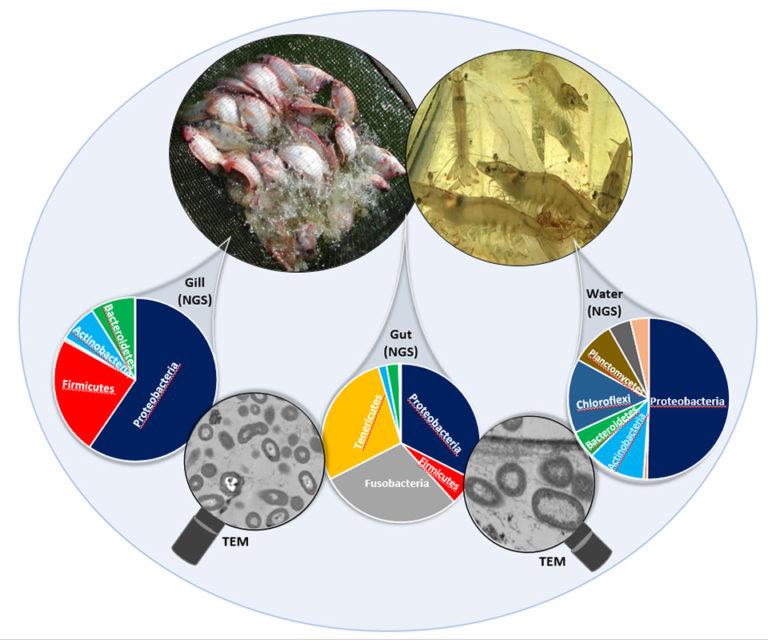 Article image for Lo pequeño es grande: Desbloqueando el potencial oculto de los microbios para la acuacultura