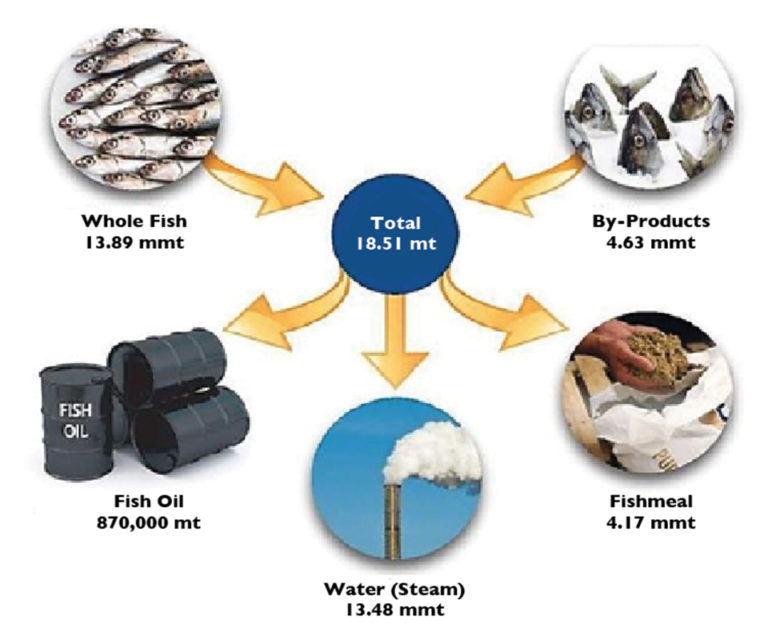 Article image for How much fish is consumed in aquaculture?