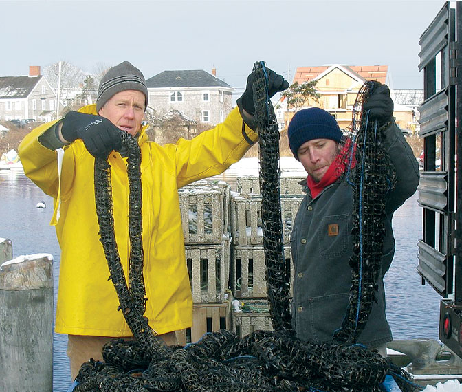 Article image for Offshore mussel culture