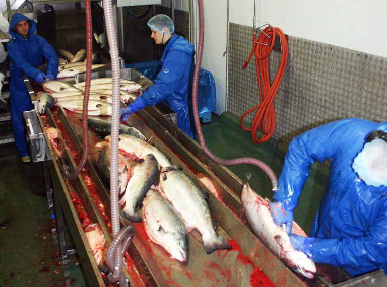 Article image for Aquaculture byproducts improve sustainability of seafood value chains