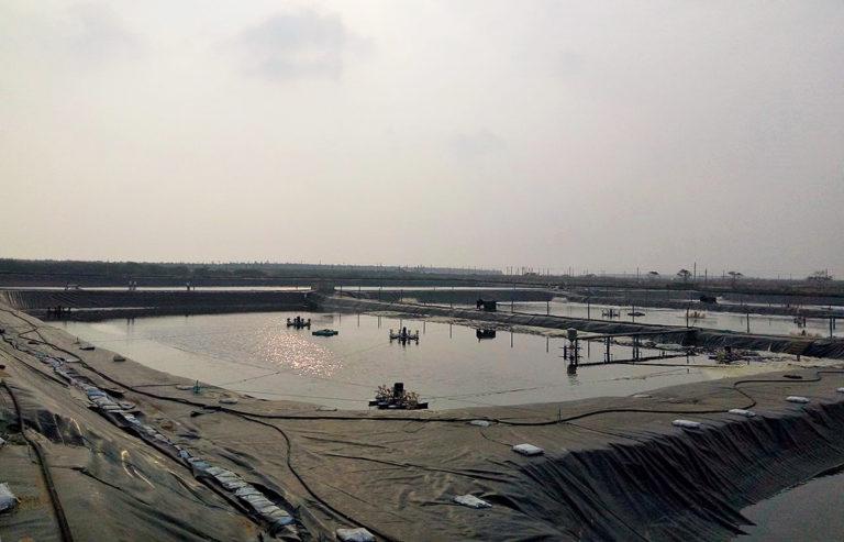 Article image for Evaluación de revestimientos plásticos de estanques para el cultivo del camarón