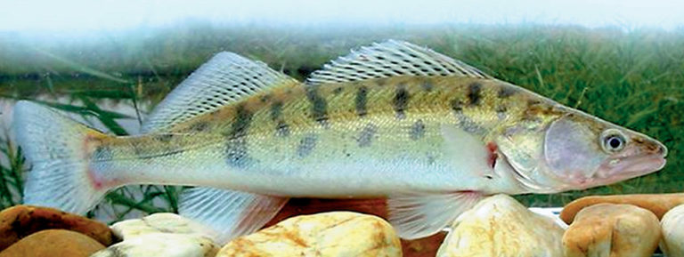 Article image for Aquaculture in Germany