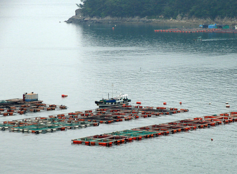 Article image for Measuring impacts of marine aquaculture partnerships