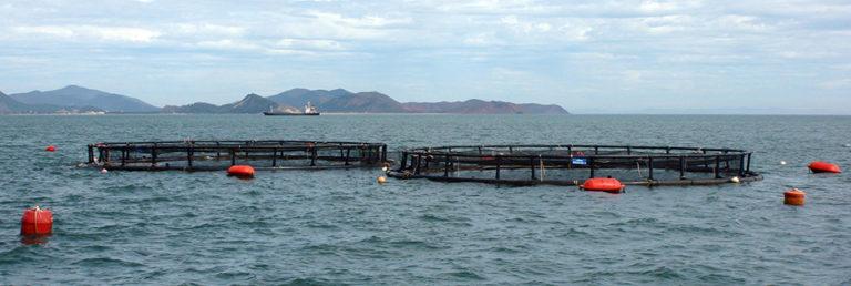 Article image for Marine fish farming in Vietnam