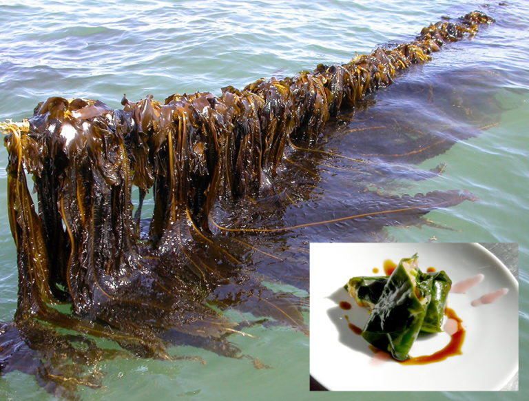 Article image for Seaweed aquaculture provides diversified products, key ecosystem functions, part 2