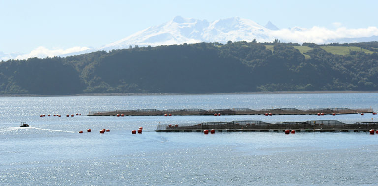 Article image for What you should know about aquaculture insurance