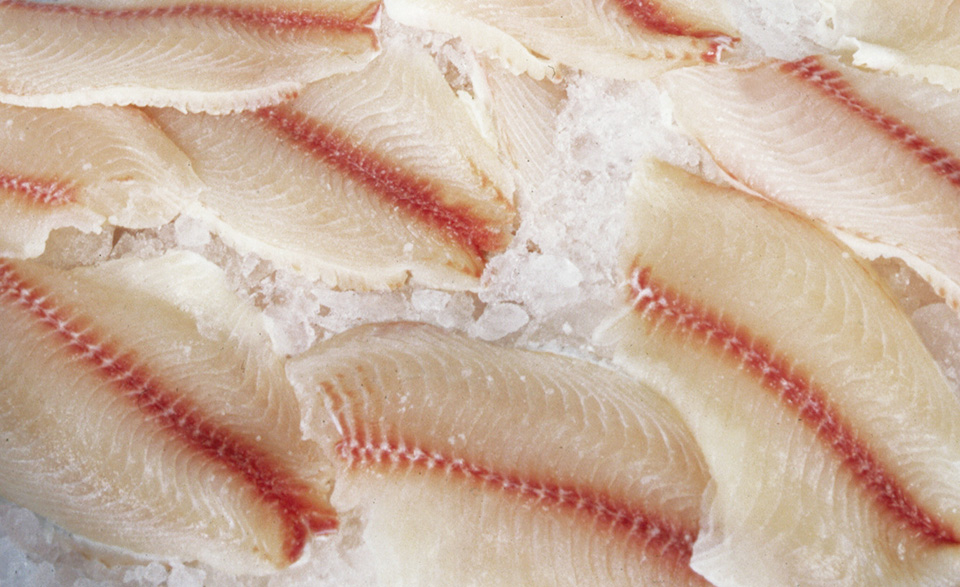 Article image for North American markets for fresh tilapia, part 3
