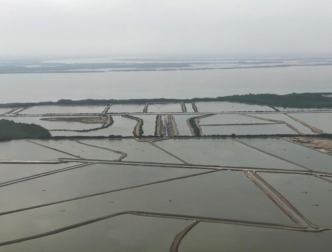 Guayas River Shrimp Farming