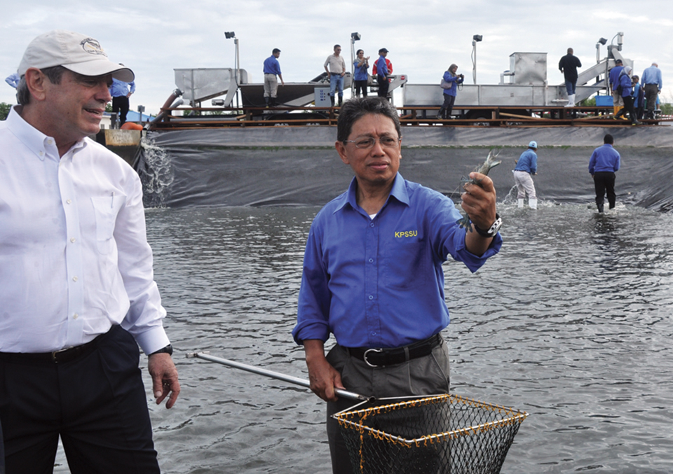 Article image for Brunei project develops technology for large black tiger shrimp production, part 1
