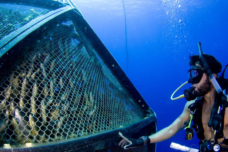 Article image for Velella project pioneers open ocean cage-farming technology