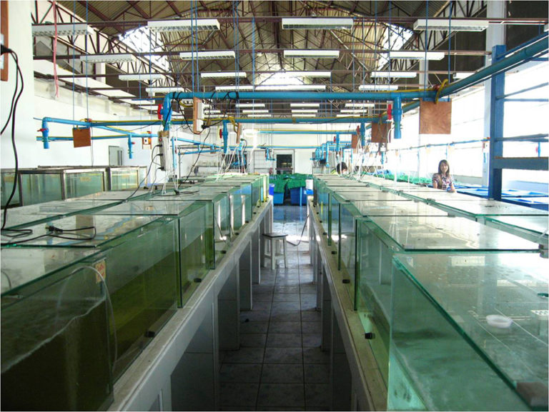 Article image for Temperature affects shrimp survival, feed conversion