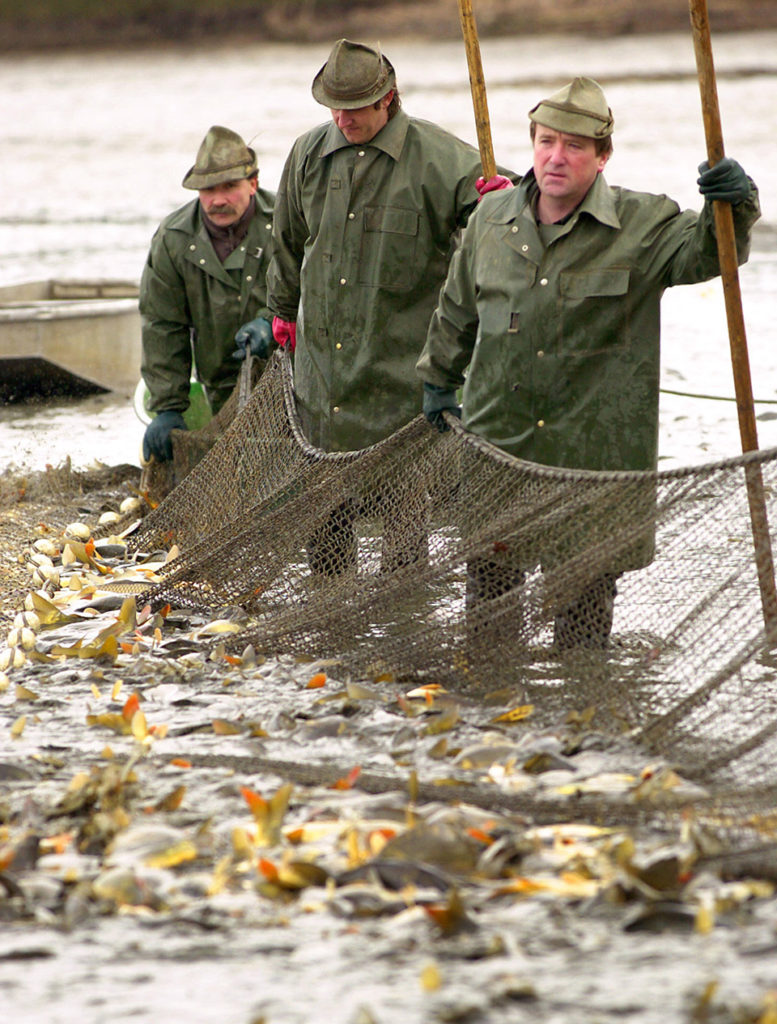 Article image for Czeching seafood consumption