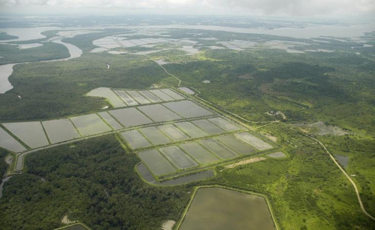 Article image for La industria de cultivo de camarón en Ecuador, parte 1