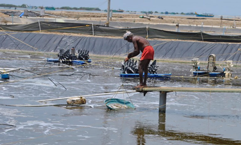 Article image for If it's broken, fix it: Startup takes on shrimp industry in India