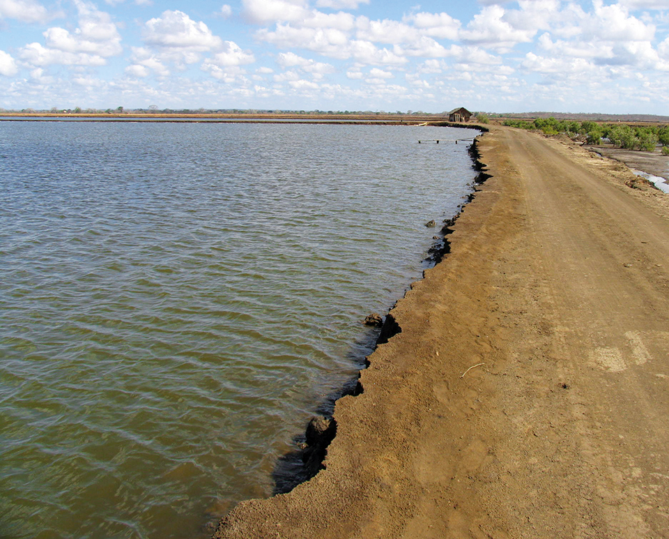 Article image for The Shrimp Book: Shrimp pond soil and water quality management