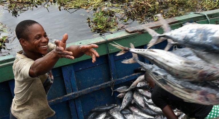 Article image for La acuacultura lidera la producción de pescado y el consumo a nuevas alturas