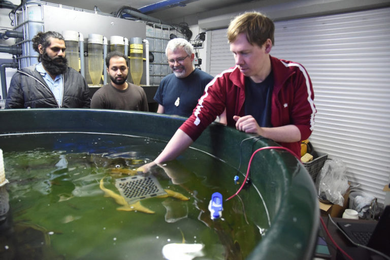 Article image for Can IoT tool help fish farmers sleep better at night?