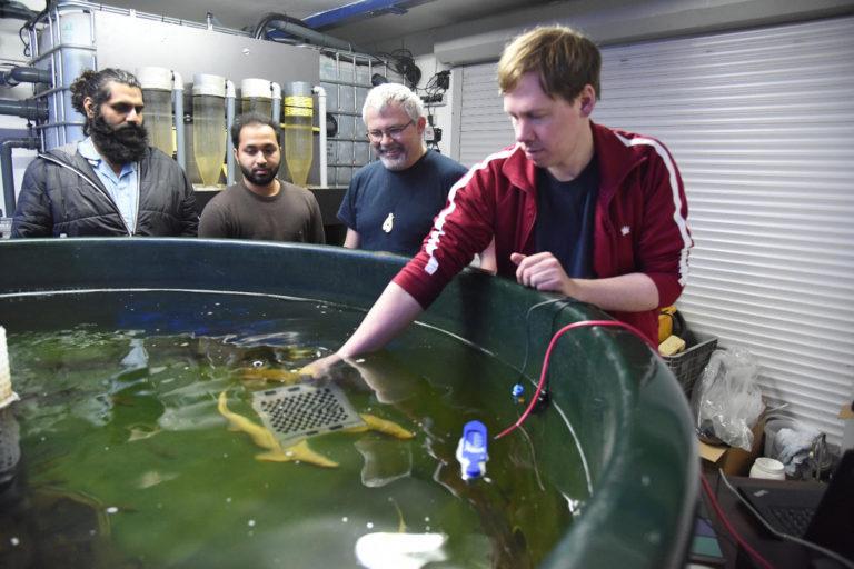 Article image for ¿Puede la herramienta IoT ayudar a los piscicultores a dormir mejor por la noche?