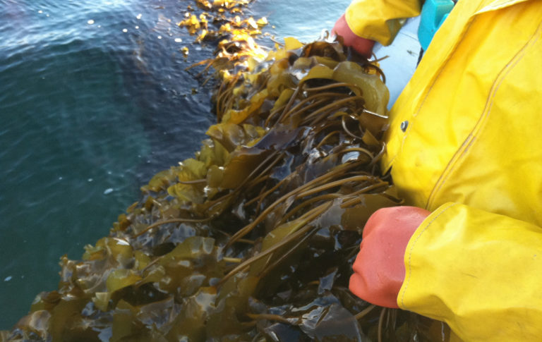 Article image for Lean and green, what's not to love about seaweed?