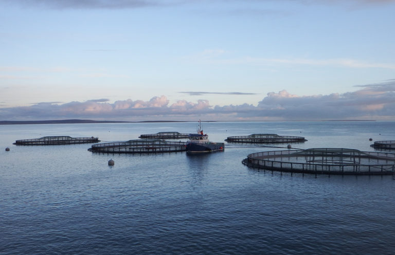 Article image for Scottish salmon leaders face mounting scrutiny, government inquiry