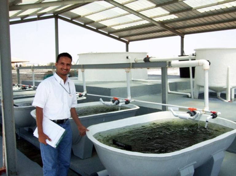 Article image for Tilapia aquaculture in Saudi Arabia