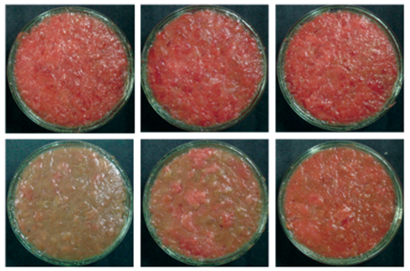 Article image for Mushroom feed additive stabilizes lipid, color of yellowtail meat