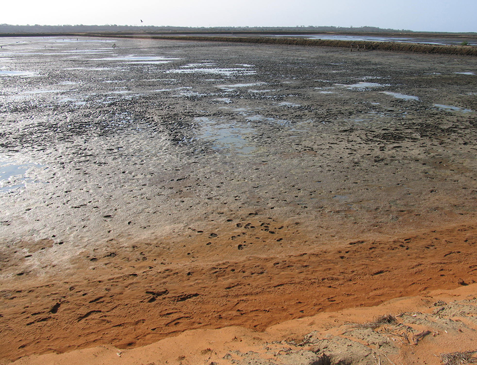 Article image for Reactions between pond bottom soil, water