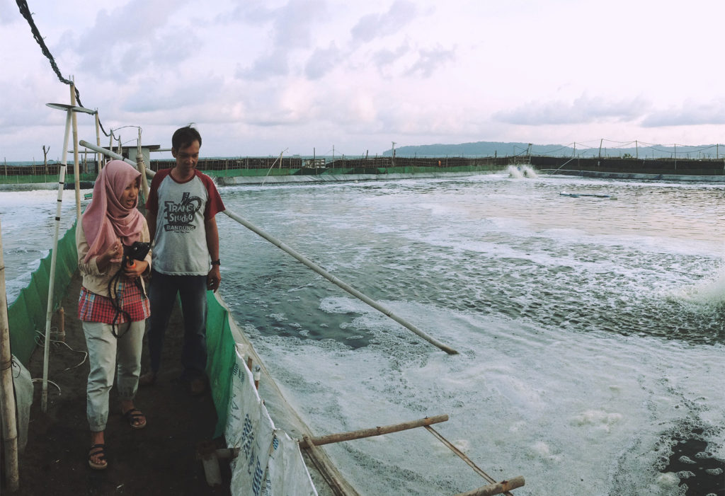 Article image for JALA engineering innovation for Indonesian shrimp farmers