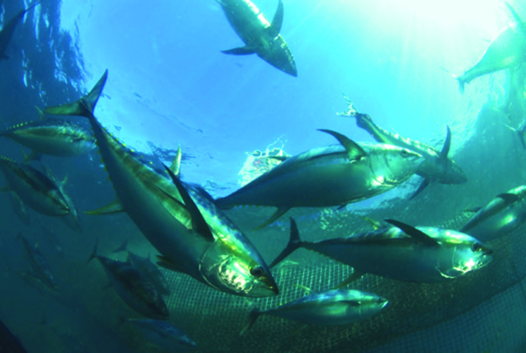Article image for Marine fish culture in Mexico