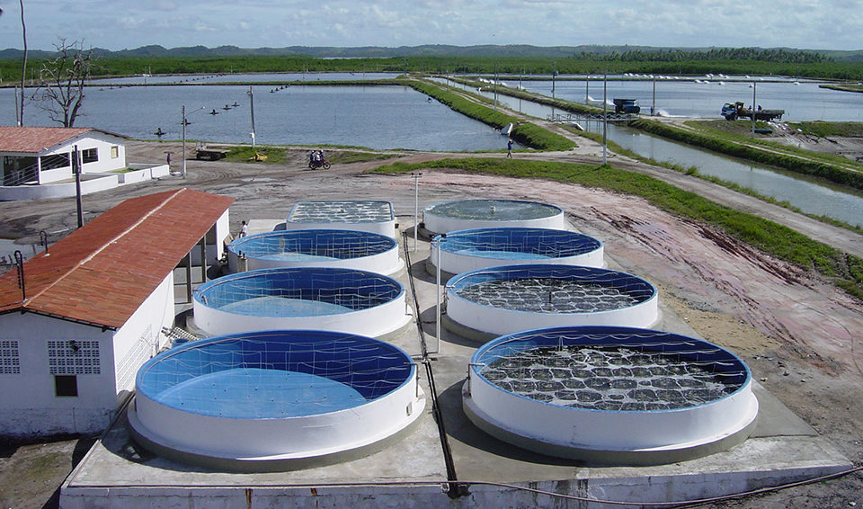Brazil S Intensive Shrimp Nursery Systems Improve Pl Management Grow Out Ponds Global Aquaculture Advocate