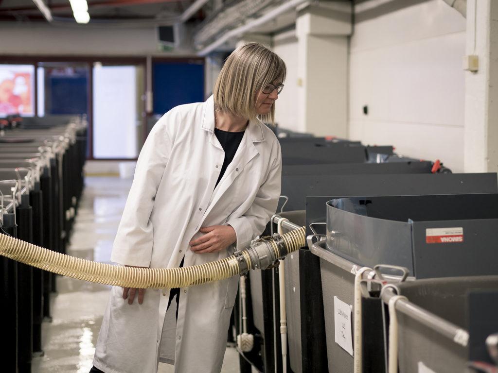 Article image for AquaGen CEO: Genomics are transforming aquaculture