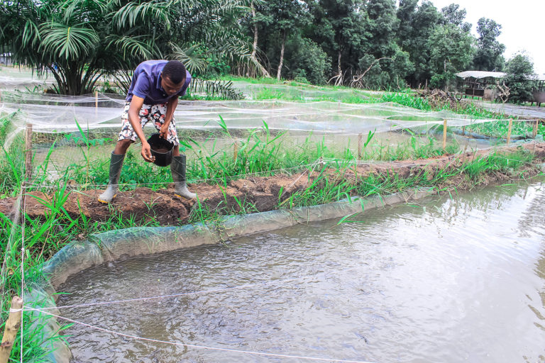 Article image for From small fry to big fish for Nigerian catfish farmer