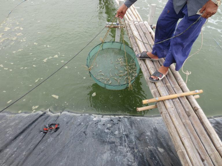 Article image for La promesa no cumplida de PCR al borde de los estanques