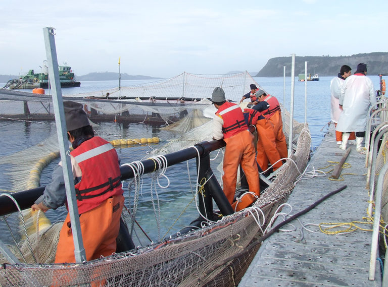 Article image for Chile's salmon industry addresses health crises
