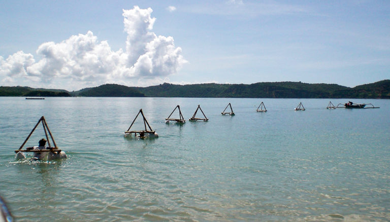 Article image for Lobster aquaculture in eastern Indonesia, part 2