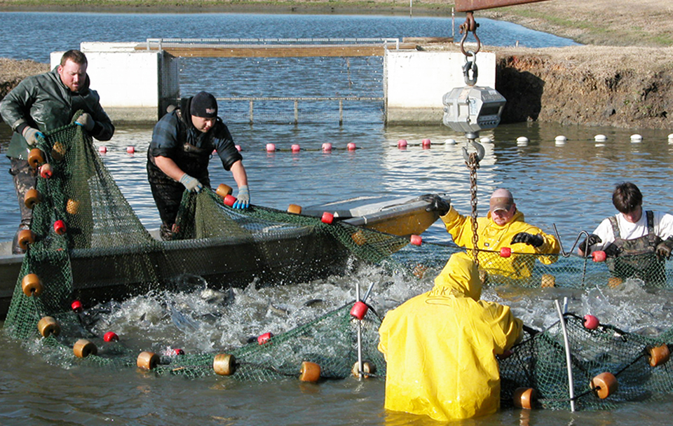 Article image for High-density split-pond systems offer high output, low maintenance