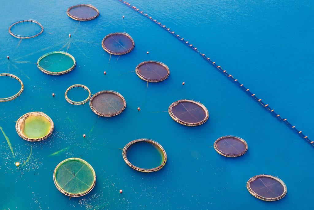 Article image for Estudio: El cambio climático es una amenaza creciente para la acuacultura