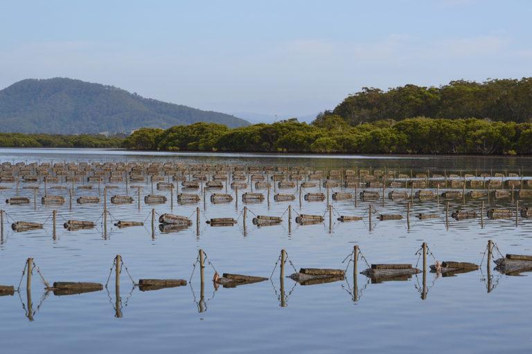 Article image for Poniendo a la vista la acuacultura Australiana