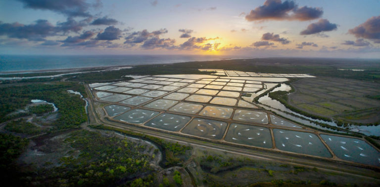 Article image for Bringing Australian aquaculture into view