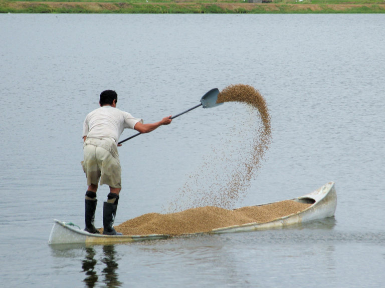 Article image for Ammonia nitrogen dynamics in aquaculture